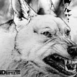 【悲報】今週のタフ、犬とレーザー車の死闘が決着!!!